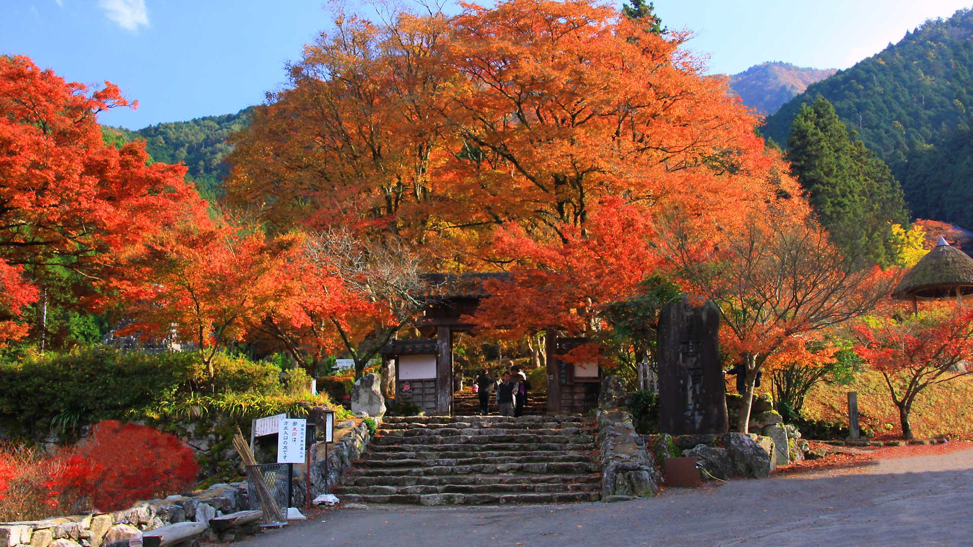 高源寺山開き 高源寺の紅葉と紅葉ライトアップ