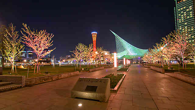 メリケンパーク・桜並木のライトアップ
